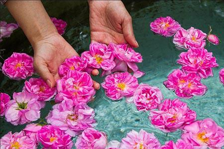 evrything-about-rose-water.jpg